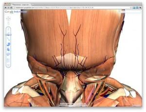 Google İnsan Vücut Haritası